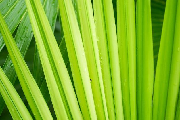 Textuur van natte palmbladachtergrond. Premium Foto