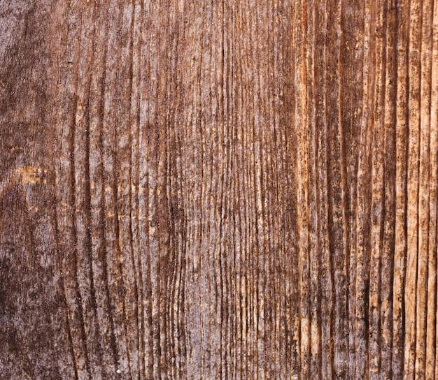 Textuur van schorshout met oud natuurlijk patroon Gratis Foto