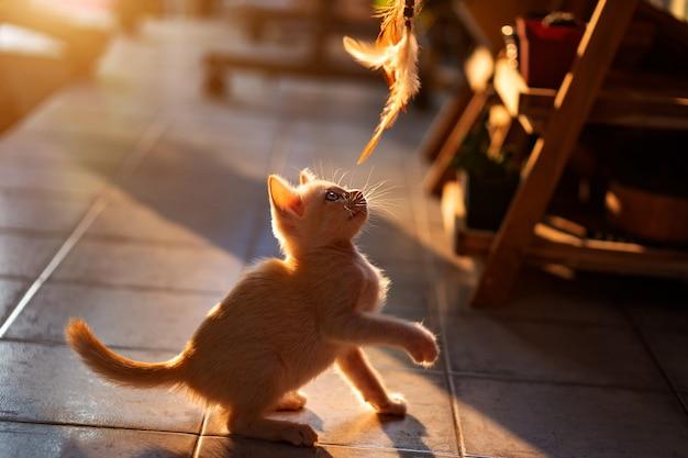 Kattenspeelgoed-beelden | Gratis vectoren, stockfoto's & PSD's
