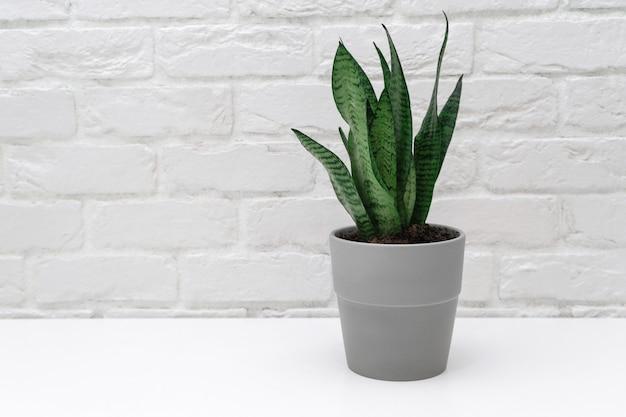 Thuis plant Premium Foto