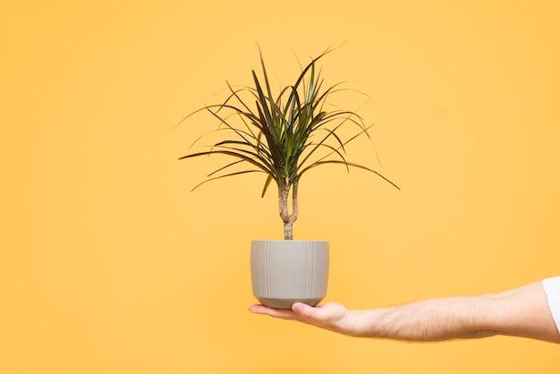 Tiener hand houdt een pot met een plant op geel Premium Foto