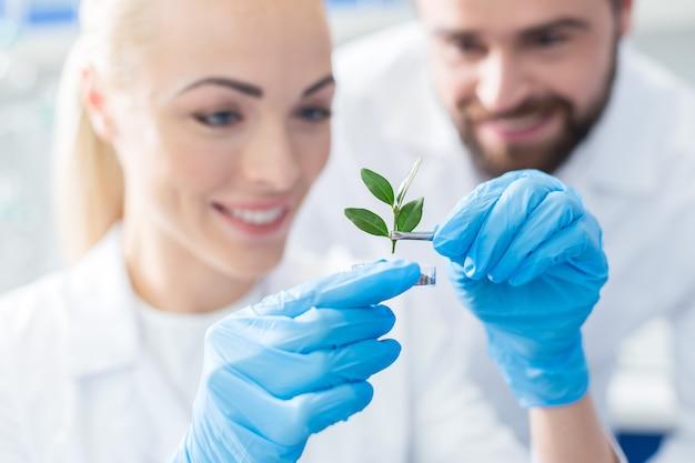 Toekomstige boom. selectieve focus van een groene spruit die wordt bestudeerd door positief opgetogen professionele biologen terwijl ze samenwerken Premium Foto