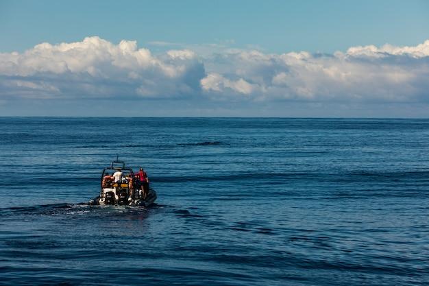 Toeristen op een boot om walvissen te spotten Gratis Foto