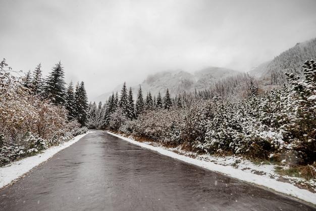 Toneel mening van de weg met sneeuw en berg en reuzebomenachtergrond in wintertijd. morske oko Premium Foto