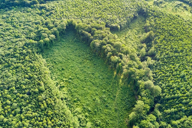 Top-down luchtfoto van groene zomer bos met groot gebied van gekapt bomen als gevolg van wereldwijde ontbossing industrie. schadelijke menselijke invloed op de wereldecologie. Premium Foto