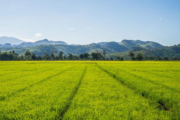 Toraja landschap en landbouw sulawesi, indonesië Premium Foto