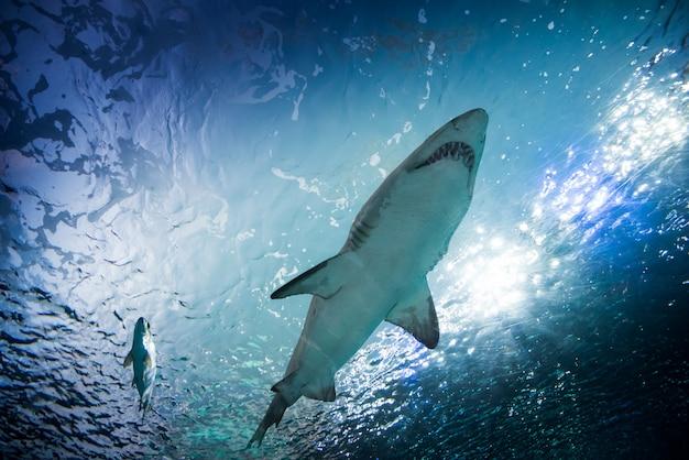 Toronto aquarium, canada Premium Foto