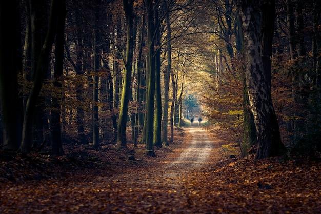 Traject in een bos omgeven door bomen en bladeren onder het zonlicht Gratis Foto