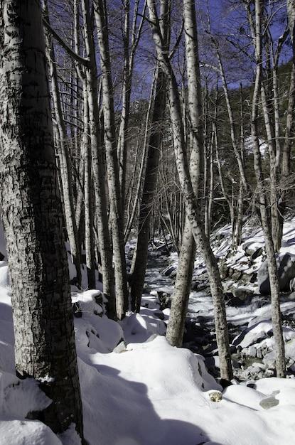 Traject in een bos omgeven door stenen en bomen bedekt met sneeuw onder een blauwe hemel Gratis Foto