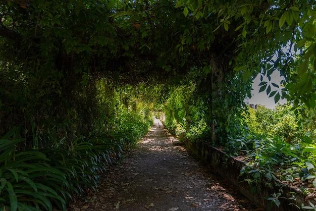 Traject in een tuin omgeven door groen onder zonlicht in tomar in portugal Gratis Foto