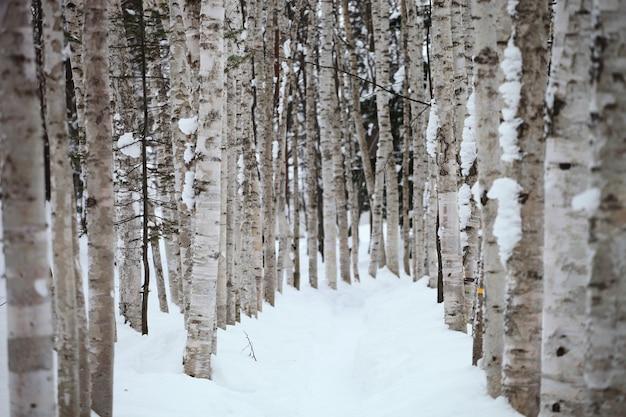 Traject omgeven door bomen bedekt met de sneeuw in hokkaido in japan Gratis Foto