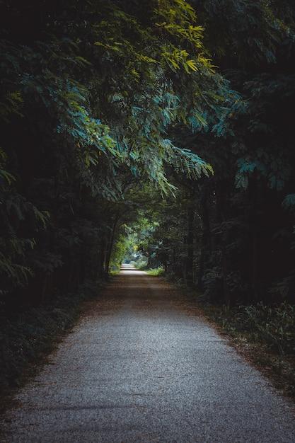 Traject omgeven door bomen en struiken in een bos onder het zonlicht Gratis Foto