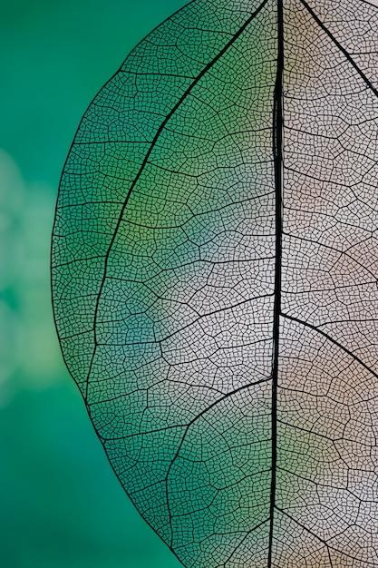Transparant abstract blad met groen en wit Gratis Foto