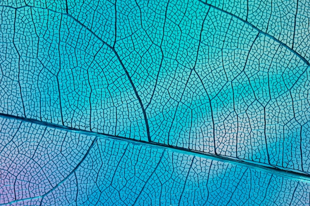 Transparant blad met blauwe achtergrondverlichting Gratis Foto
