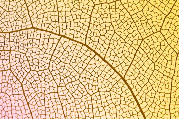 Transparant blad met gele achtergrondverlichting Gratis Foto