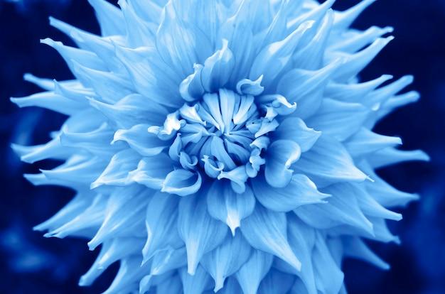 Trendkleur 2020 klassiek blauw, bovenaanzicht. bloem in trendy blauwe kleur Premium Foto