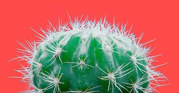 Trendy tropische neoncactusplant op rood Gratis Foto