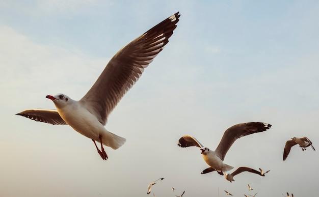 Troep van zeemeeuwen die in de hemel vliegen Gratis Foto