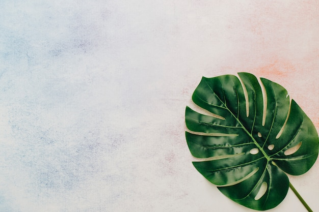 Tropisch blad met exemplaarruimte op waterverfachtergrond Gratis Foto