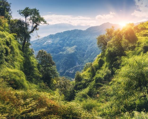 Tropisch bos met groene bomen op de berg bij zonsondergang in de zomer Premium Foto