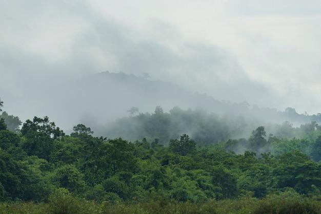 Tropisch diep regenwoud, lagen van luifelboom en berg, vrijheid en kuuroordconcept Premium Foto