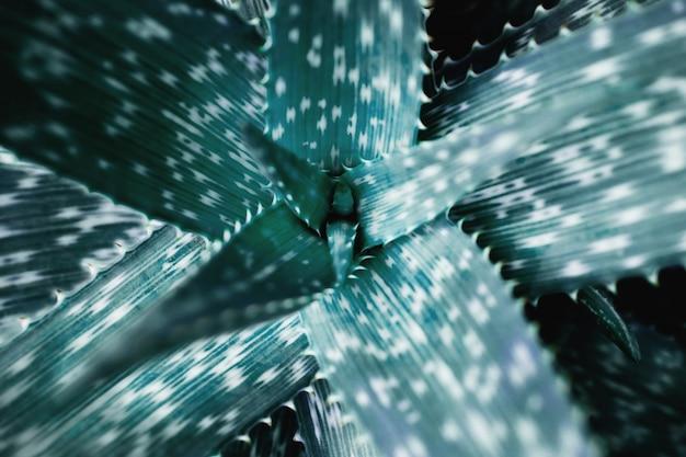 Tropisch groen blad. botanische boom. bovenaanzicht en selectieve focus Premium Foto