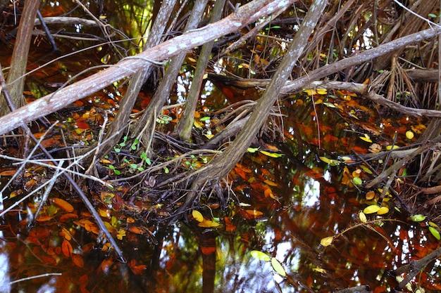 Tropisch het waterdetail van het mangrovemoeras Premium Foto
