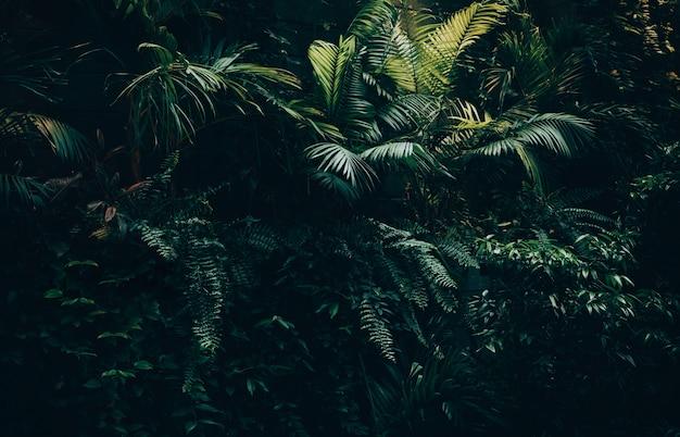 Tropische bladeren achtergrond, jungle blad tuin Premium Foto