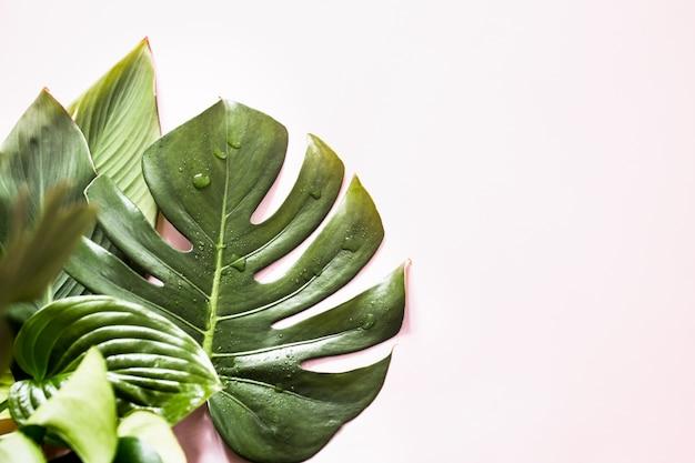 Tropische bladeren op een gekleurde achtergrond Gratis Foto