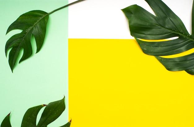 Tropische bladeren op gree en geel Premium Foto