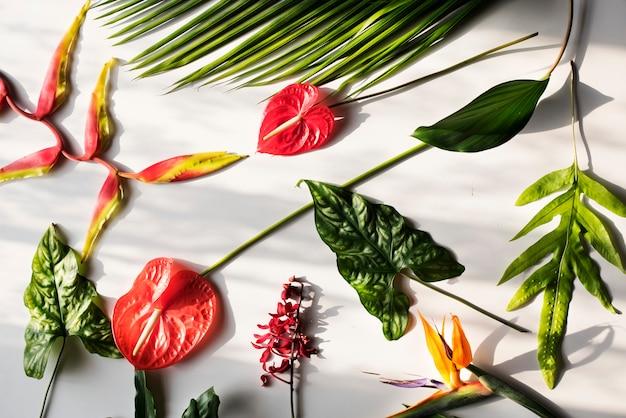 Tropische bloemen op witte achtergrond Premium Foto