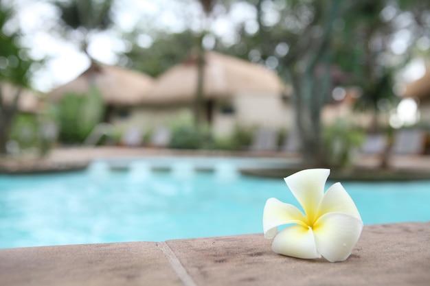 Tropische bloemen zwembad Premium Foto