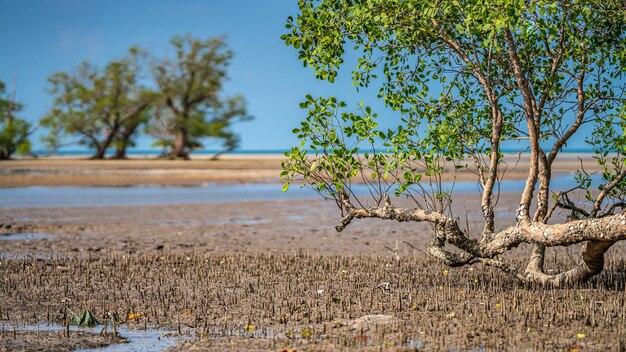Tropische boom op overzees strand Premium Foto