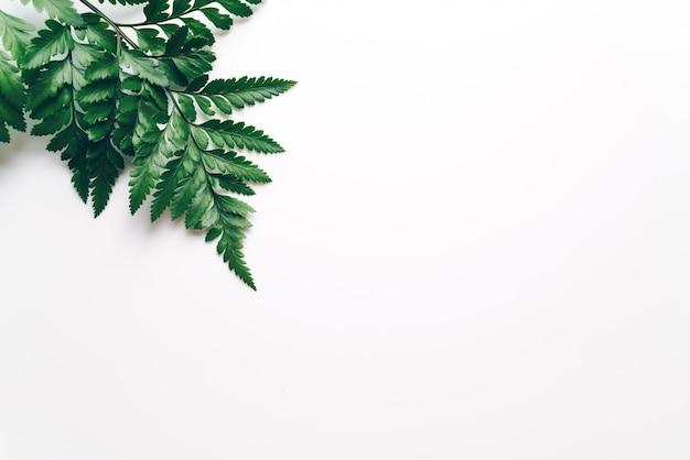 Tropische groene bladeren op kleur Premium Foto