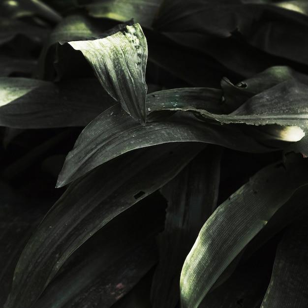 Tropische het grasbladen van de close-up Gratis Foto