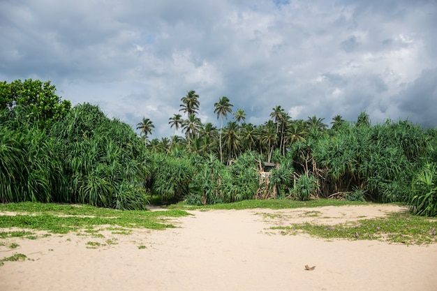 Tropische jungle met palmbomen op de oceaan kust, met wolken aan de hemel, sri lanka Premium Foto