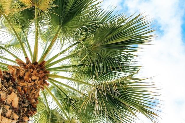 Tropische kokosnotenpalm op blauwe hemel Gratis Foto