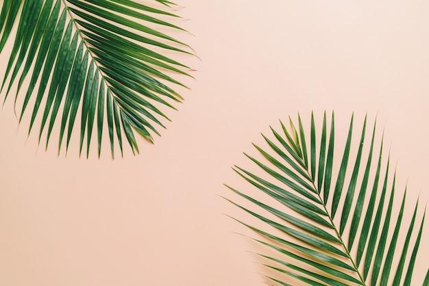 Tropische palmbladen bovenaanzicht Premium Foto