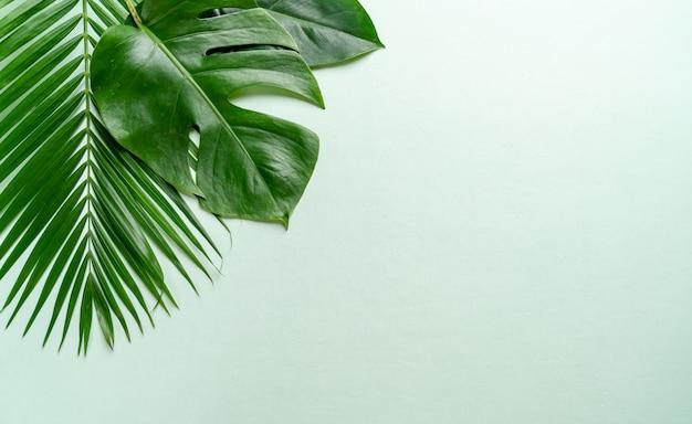 Tropische palmbladen met exemplaarruimte Premium Foto