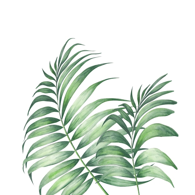 Tropische palmbladen. Premium Foto