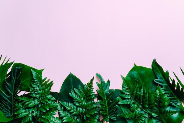 Tropische palmbladenachtergrond met exemplaarruimte Premium Foto