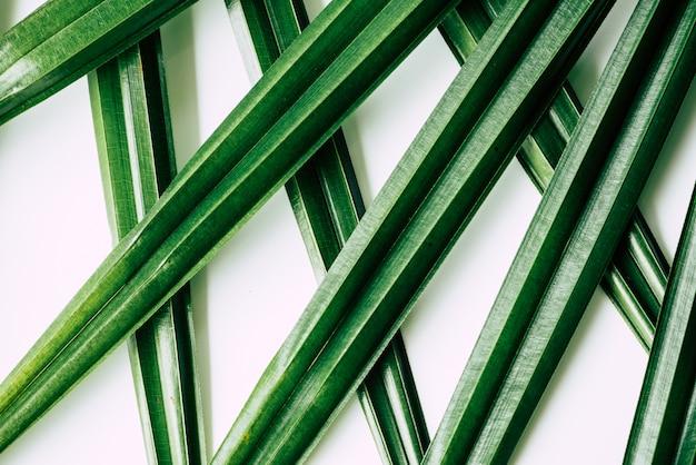 Tropische planten Premium Foto