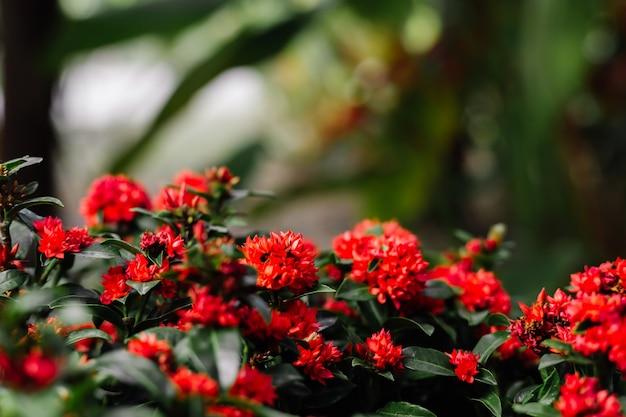 Tropische rode bloemen Gratis Foto