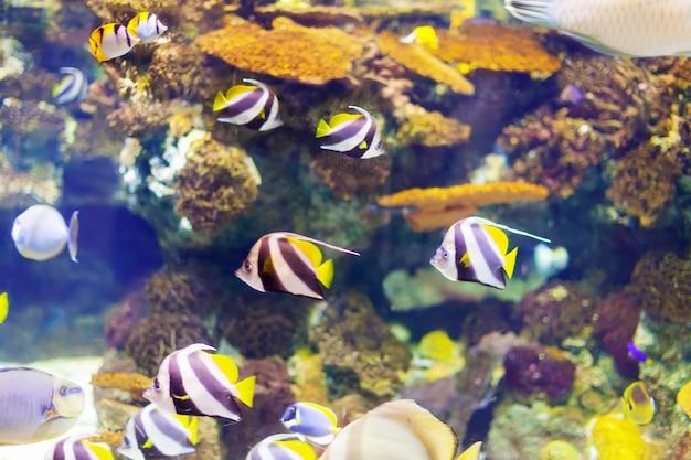 Tropische vissen bij koraalrif Gratis Foto