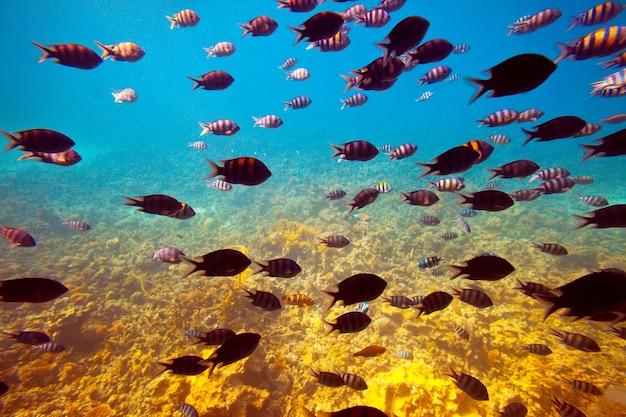 Tropische vissen in koraalrifgebied Gratis Foto