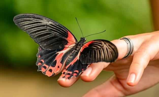 Tropische vlinder aan de kant van het meisje Premium Foto