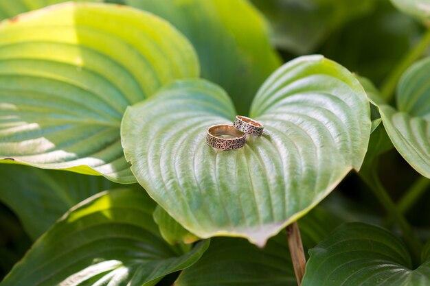 Trouwringen op grote groene bladeren Premium Foto