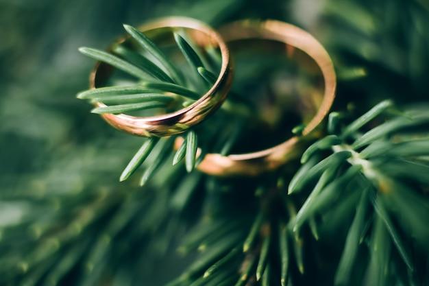 Trouwringen. sieraden in wit en geel goud. trouwring op groen Premium Foto