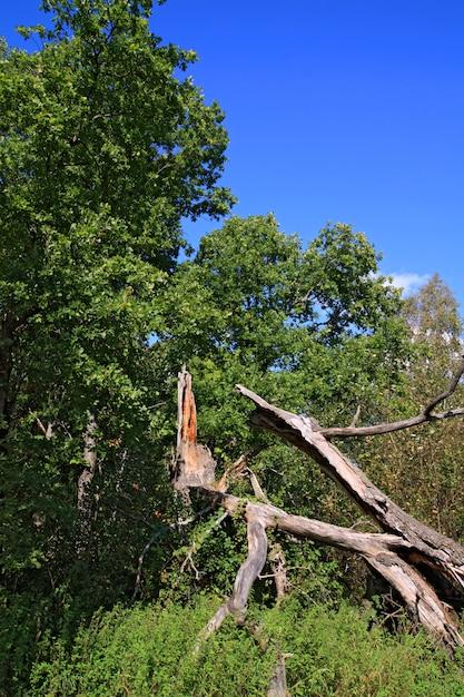 Tuimelde boom in groen hout Premium Foto