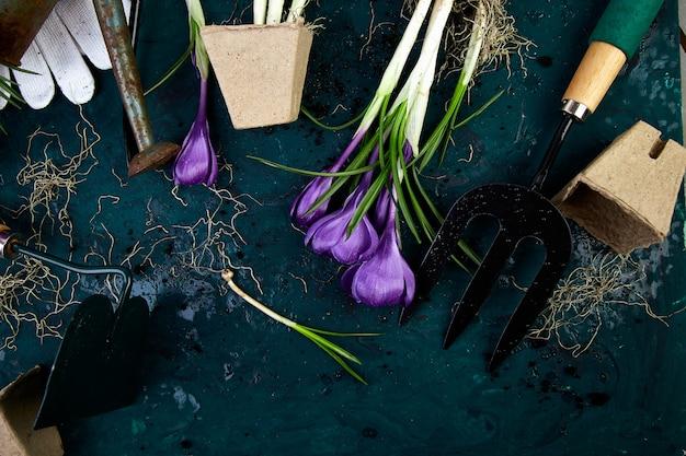 Tuingereedschap, turfpotten, krokusbloem. de lente Premium Foto